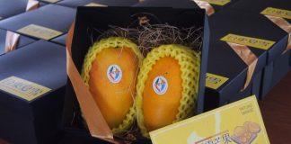"""Les mangues """"Neige en été"""" (Photo : Commission ministérielle de l'agriculture)"""